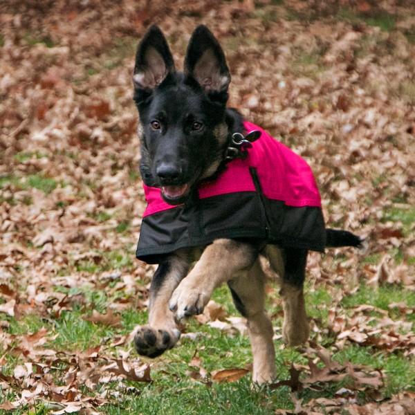 Hundedecke Warm und Wasserdicht PINK