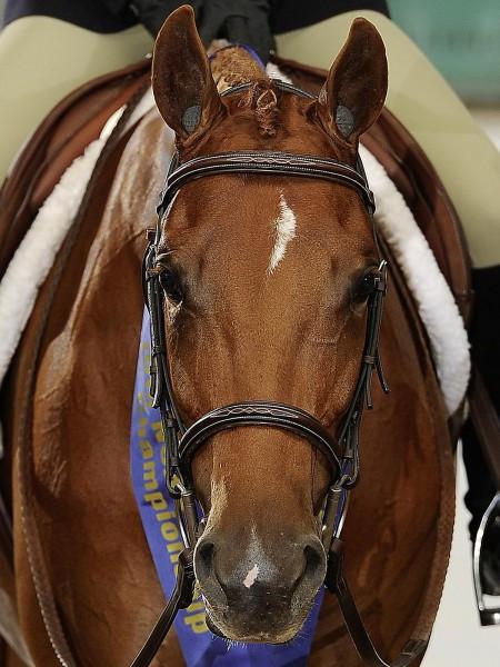 Pomms Geräuschschutz Pferd